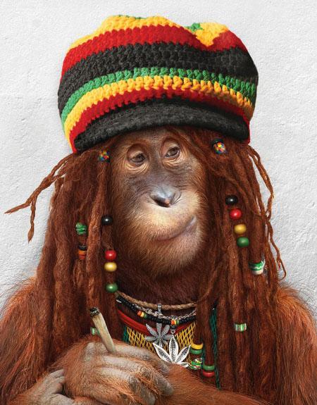 a.baa-smoking-monkey-a-cigarette
