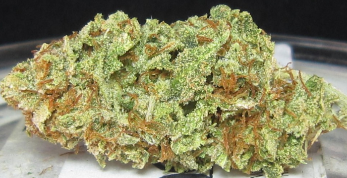 sour-diesel-marijuana-strain-user-submitted-photo-1