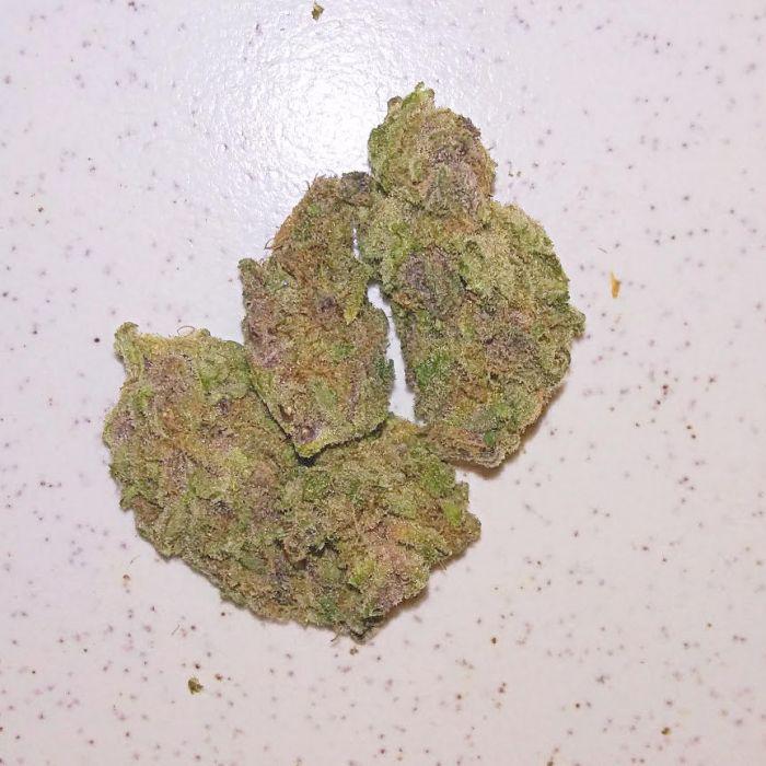 gorillaglue2a